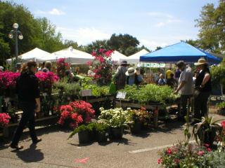 Zilker Garden Festival_Zilker Botanical Gardens