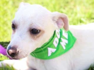 April Showers Dog Wash benefiting Houston Pets Alive