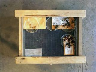 Amon Carter Museum of American Art presents Dornith Doherty: Archiving Eden