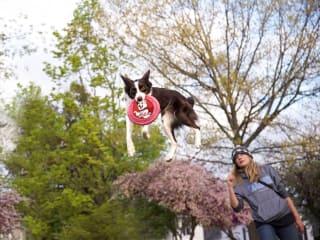 Bridgeland presents 9th Annual Howl-O-Ween Festival