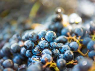 Five Course Silver Oak Wine Dinner
