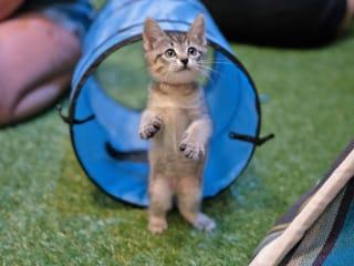 Austin Cat Convention