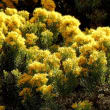 Houzz southwestern native shrubs plants gardening turpentine bush