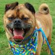Hosuton, Pethouse Pet of the Week, May 26, 2017, Achilles