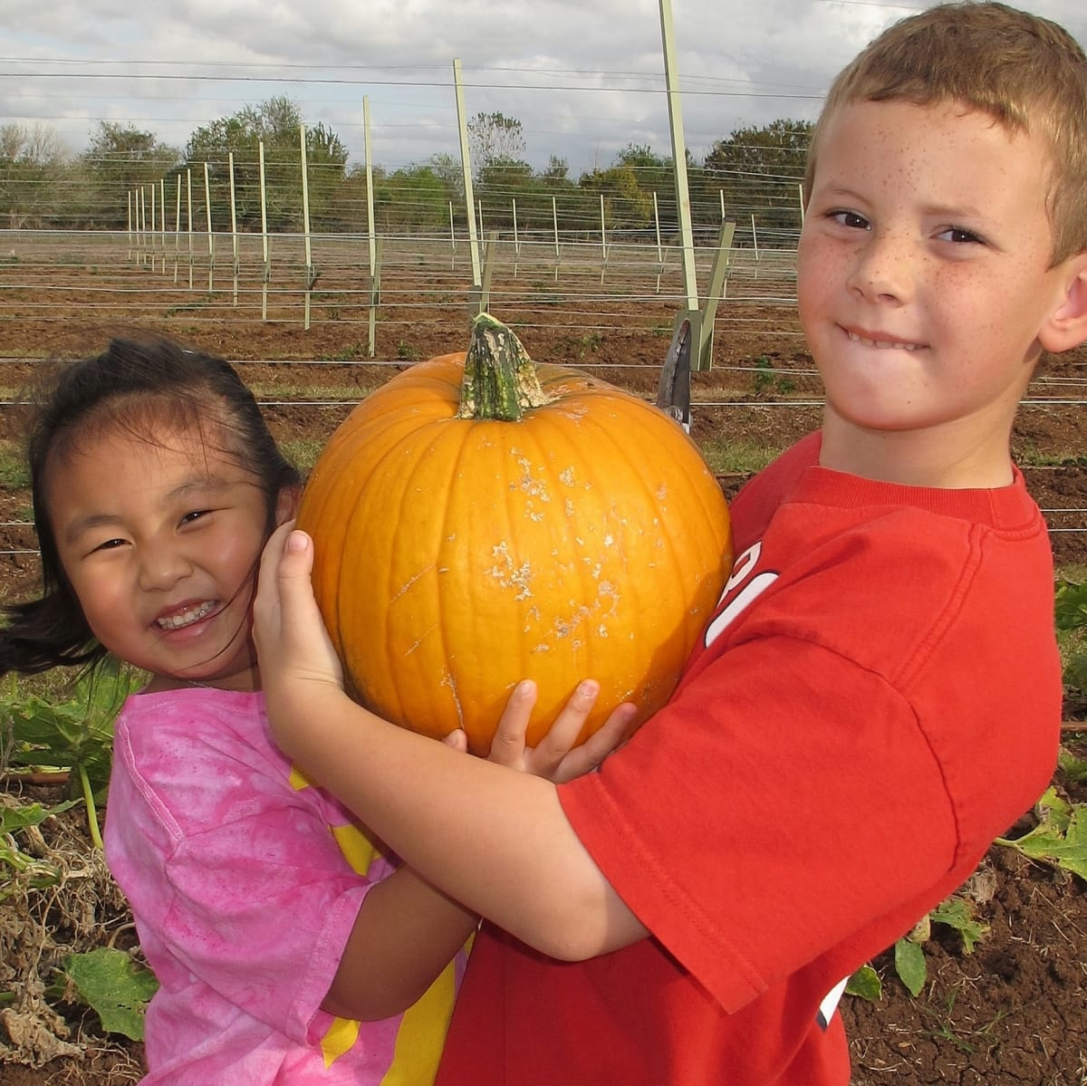 Fall Festival and Pumpkin Patch at Blessington Farms