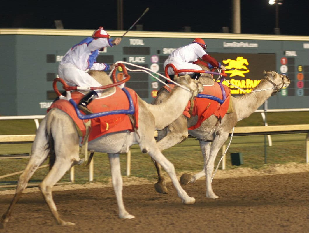 Lone star park extreme racing event troubles dallas animal for Lone star motors fort worth tx