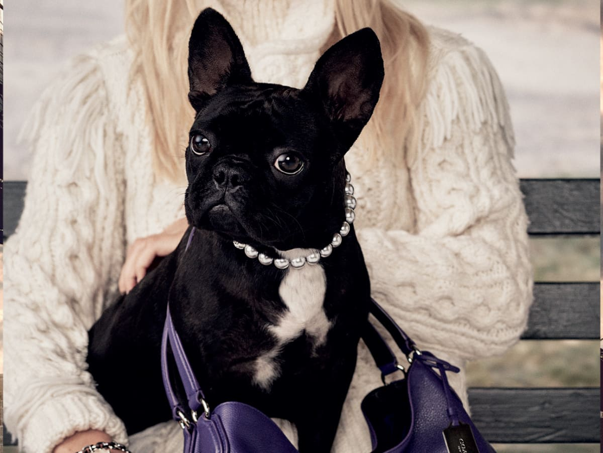 Coach ad campaign featuring Lady Gaga's dog