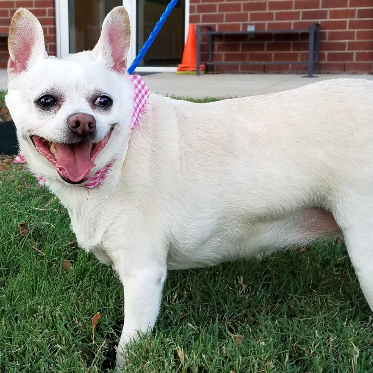 Hoffman, Pethouse Pet Wanda, Sept 2017