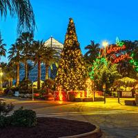 Moody Gardens Galveston festival of lights