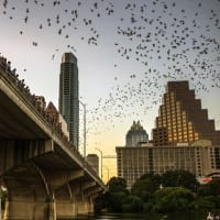 Austin downtown skyline bats Congress Bridge