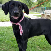 Houston, Pethouse pet of the week, August 2017, Peaches