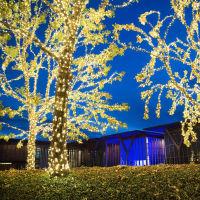 Modern Lights, Modern Art Museum of Fort Worth