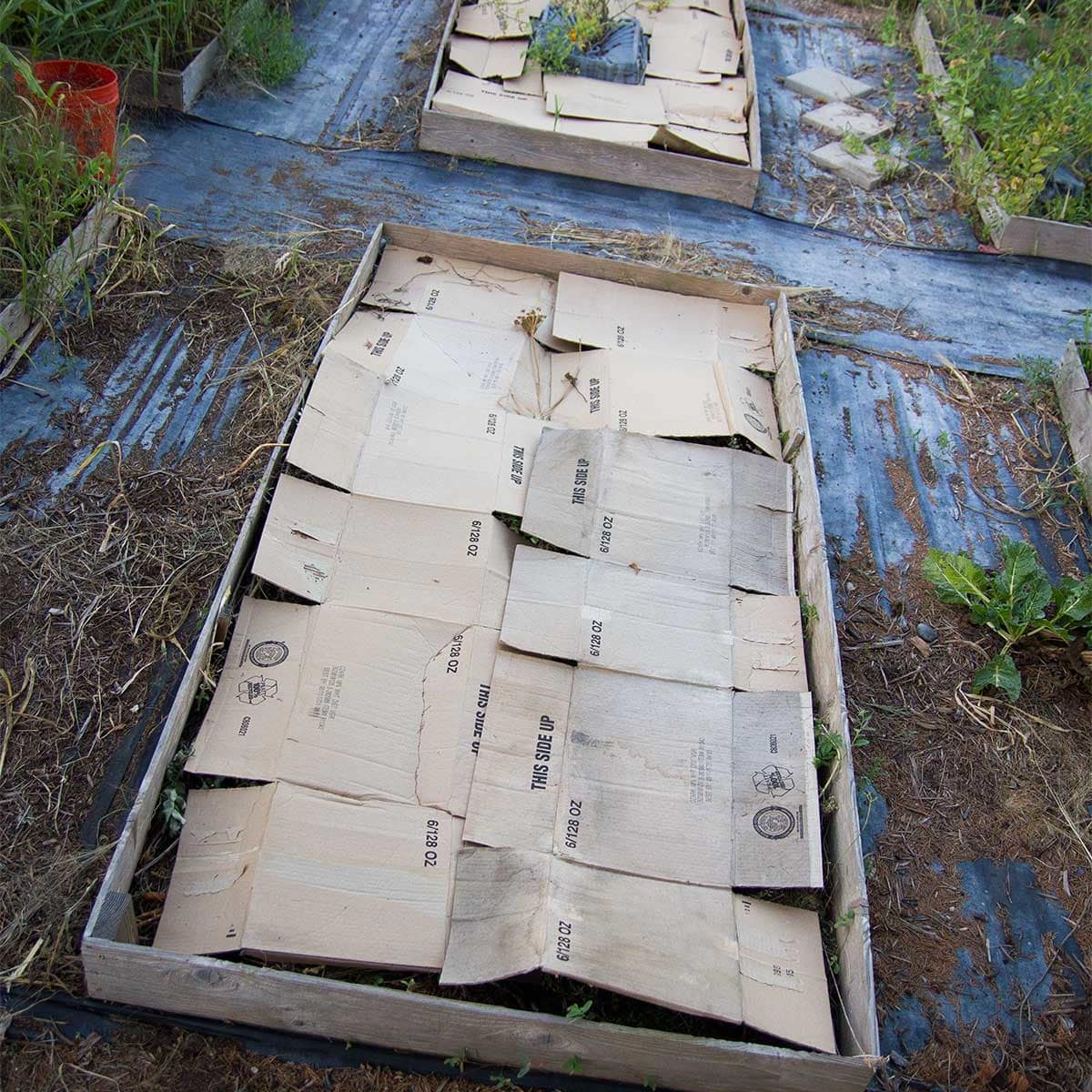 photo of garden bed covered in cardboard