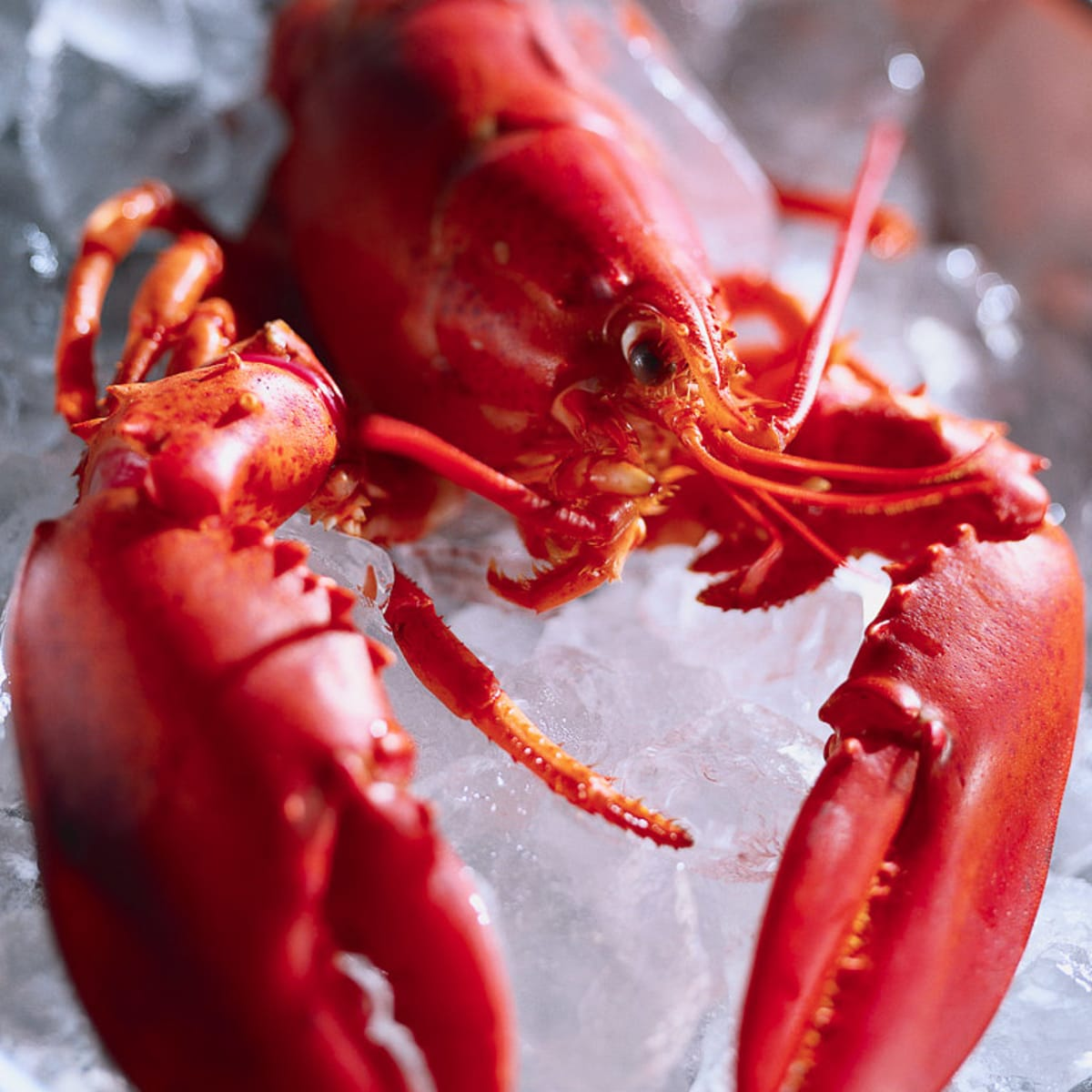 Places-Food-The Palm-lobster
