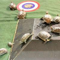 Little Woodrow's presents Turtle Race Thursdays