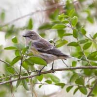 Winter Birding with Gary Clark