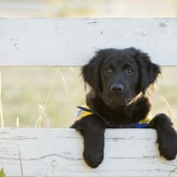 Canine Companions for Independence presents Yappy Hour