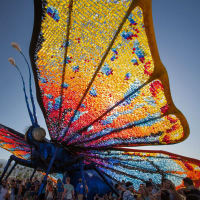 The Roundup Outdoor Music Venue presents Bluegrass and Butterfly Festival