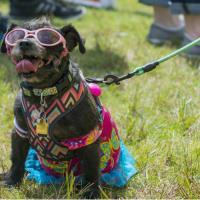 Canine Carnival and Doggone Fun Run