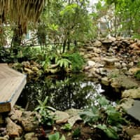 Austin_photo: Places_Outdoors_Zilker Botanical Gardens_pond