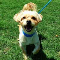 Pet of the Week- Teddy