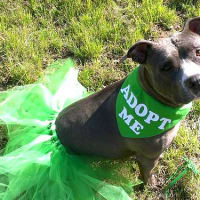 Picture this Pet - Austin Pets Alive - Blue Meadow 2 - March 2015