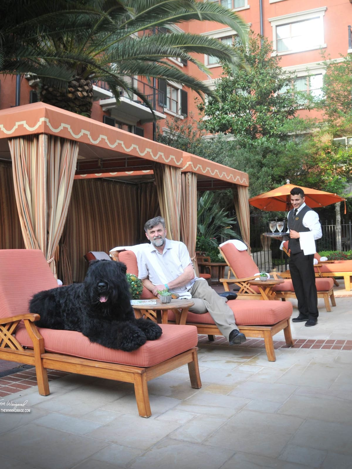 News, Shelby, Pix of the Day, Dog at Hotel Granduca, July 2015