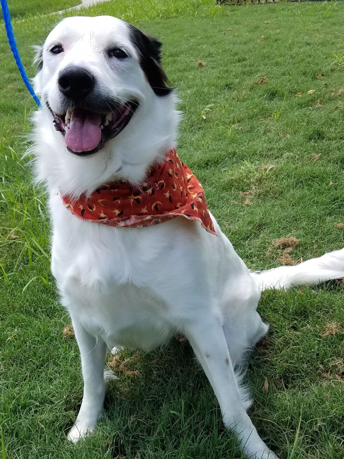 Houston, Pethouse pet of the week, bailey, august 2017