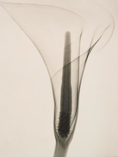 MFAH art opening: Shadows on the Wall: Cameraless Photography from 1851 to Today