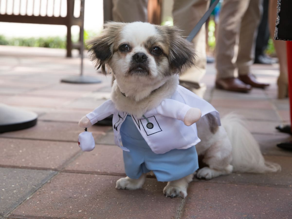 Nadia  Abelhad's dog Mr. Poe Match Day at McGovern Medical School UTHealth