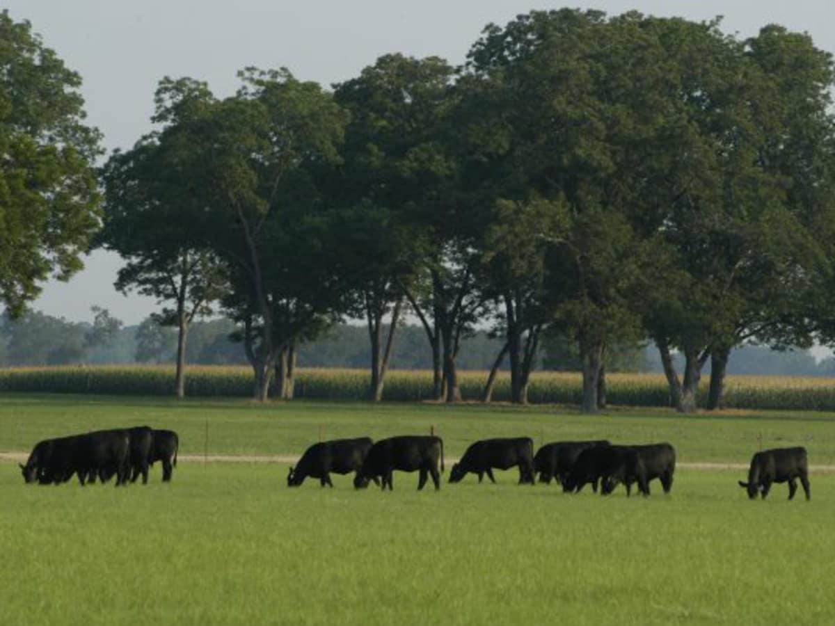 44 Farms