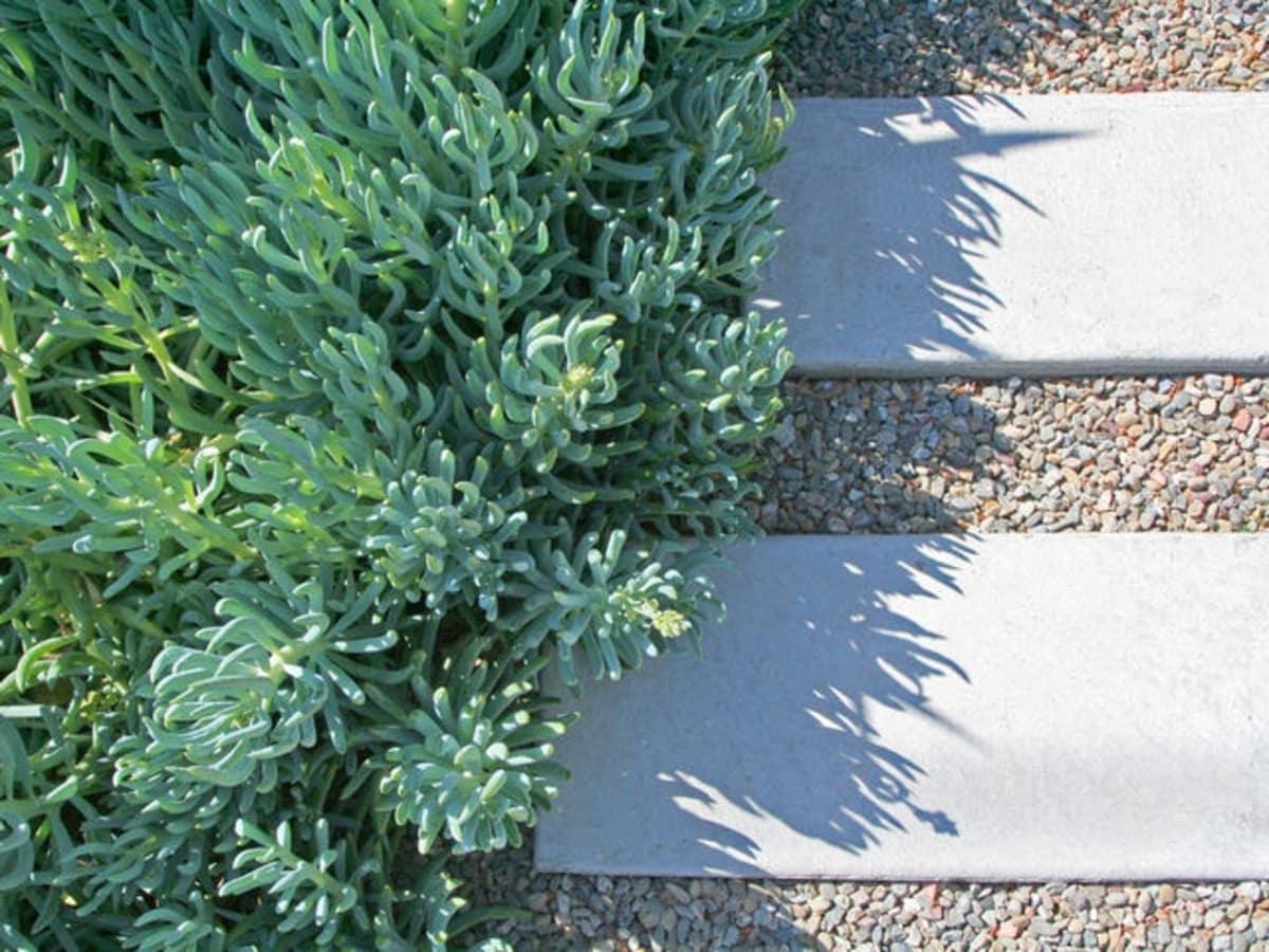 Houzz succulent garden