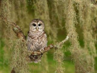 Houston Audubon Society presents Houston Audubon Gala: Education that Soars