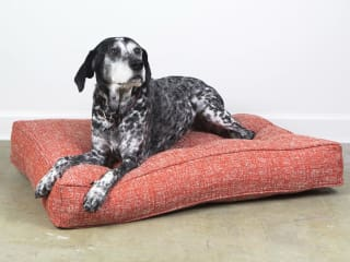 BG Dog Beds