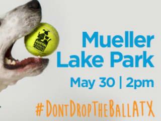 Austin Animal Center_Don't Drop the Ball ATX_May 2015