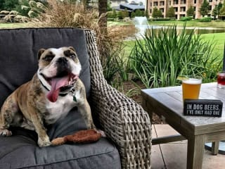 Robard's Steakhouse presents Yappy Hour