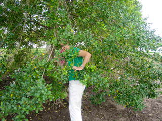 News_Jane Howze_golf etiquette_trees