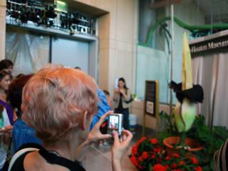 News_Lois_corpse flower_072310_crowd