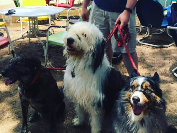The Friendly Spot dogs pups