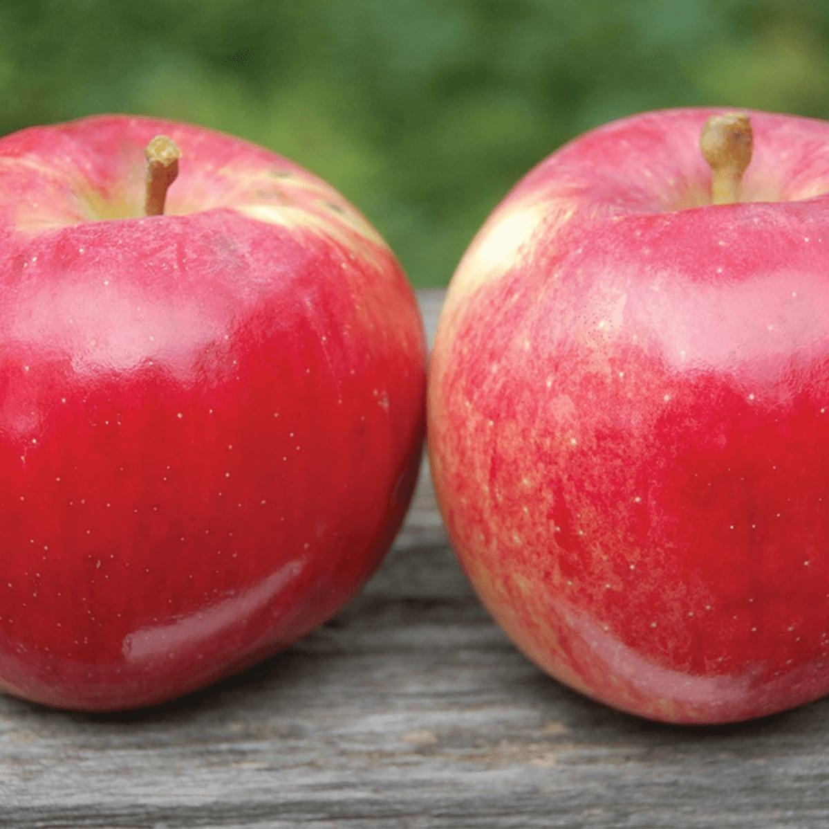 Photo of apple