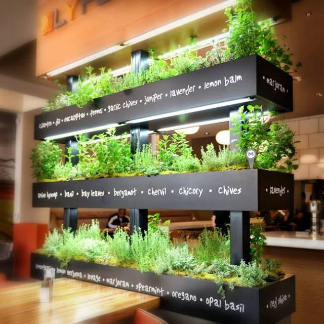 LYFE Kitchen herbs