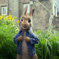 Peter Rabbit (James Corden) in Peter Rabbit