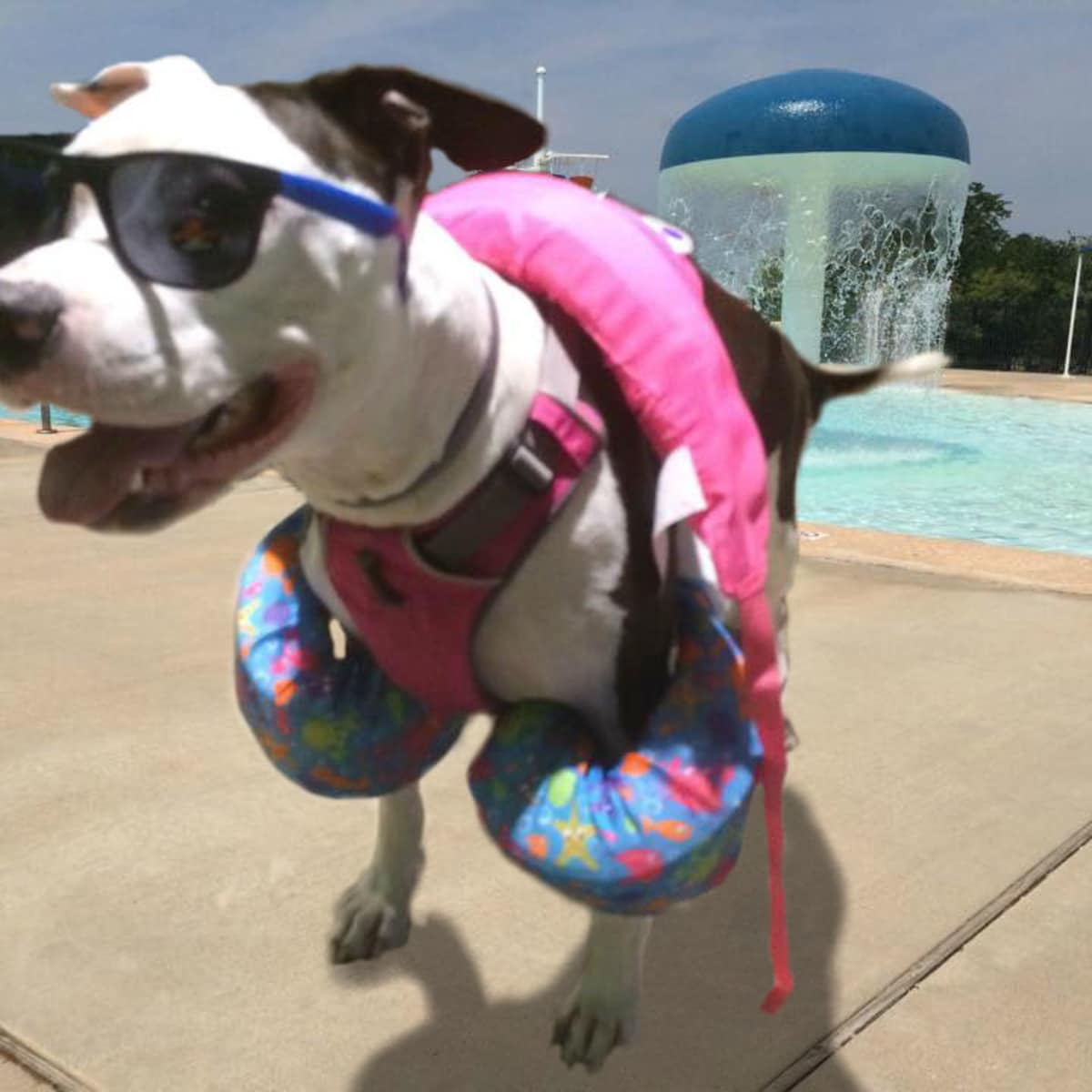 Hays Communities Family YMCA presents Paws in the Pool