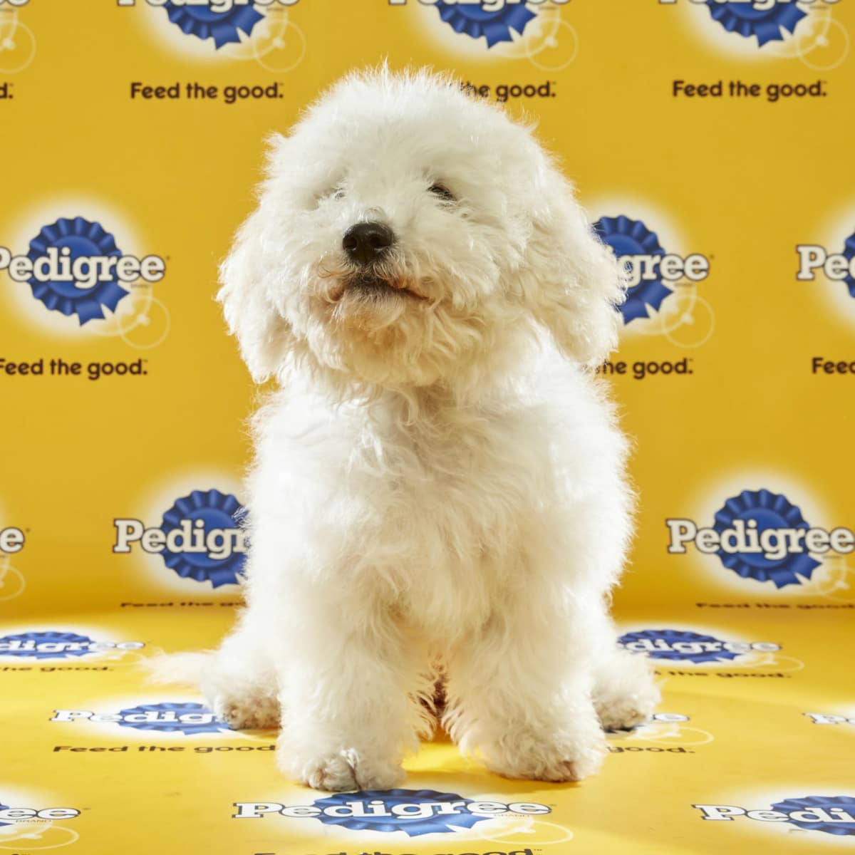 Puppy Bowl 2016 Poppy dog Sherry Stephens Animal Planet