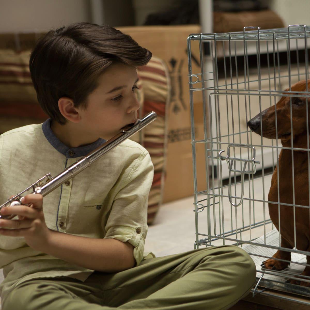 Weiner-Dog
