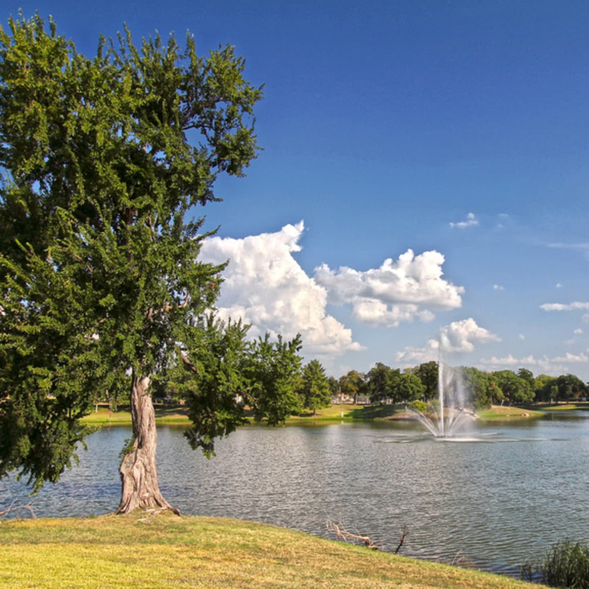 Lake Cliff Park