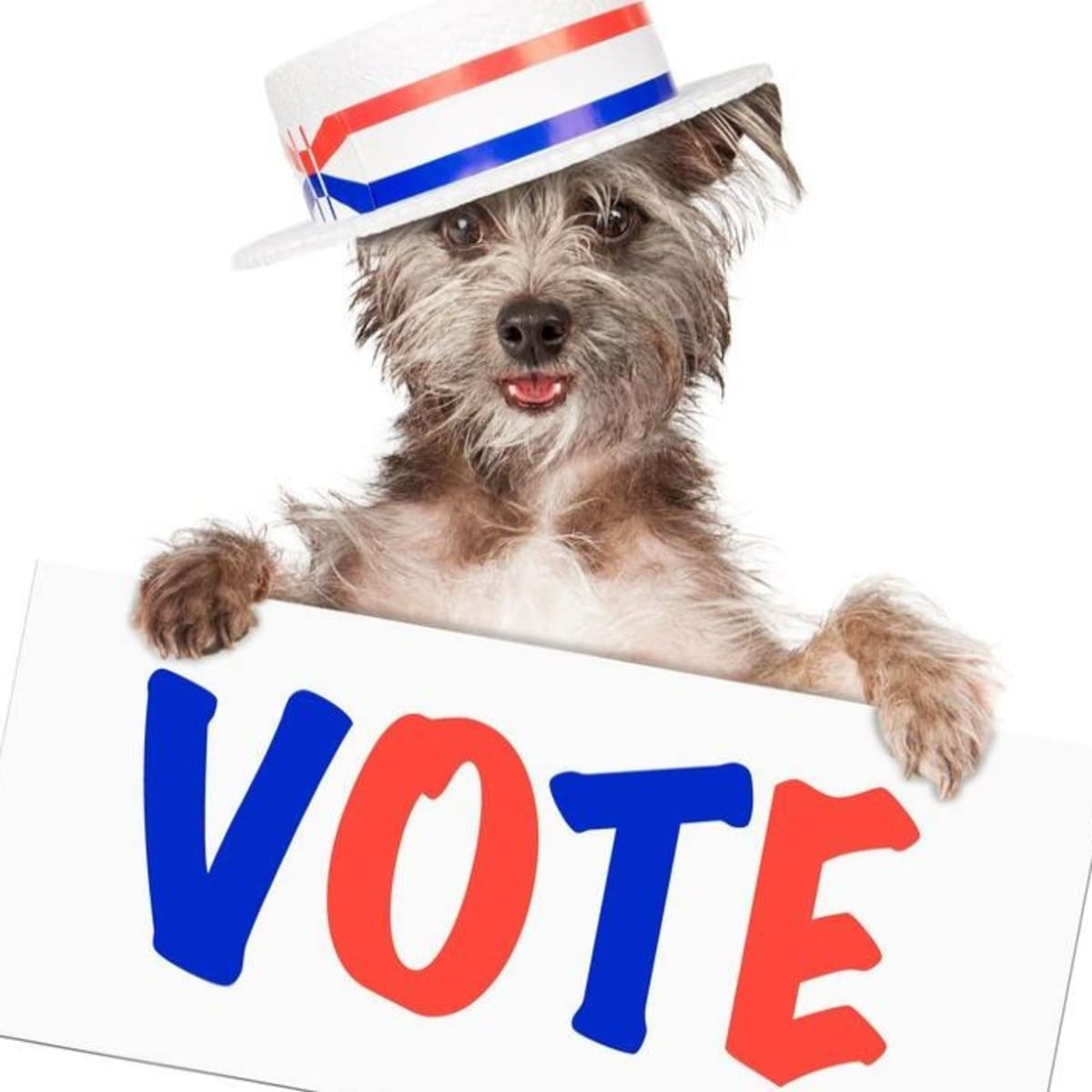 Dog with vote sign
