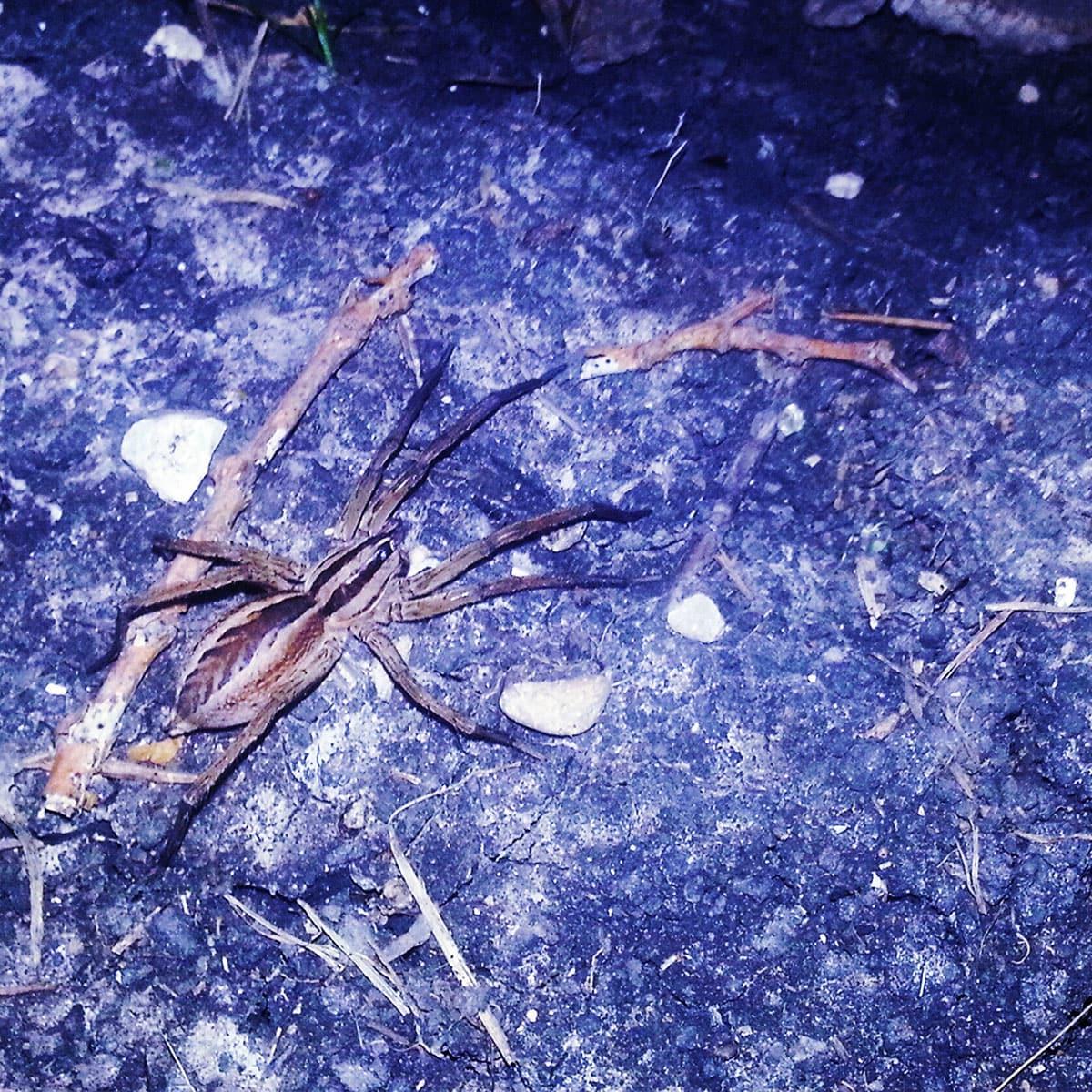 Photo of wolf spider