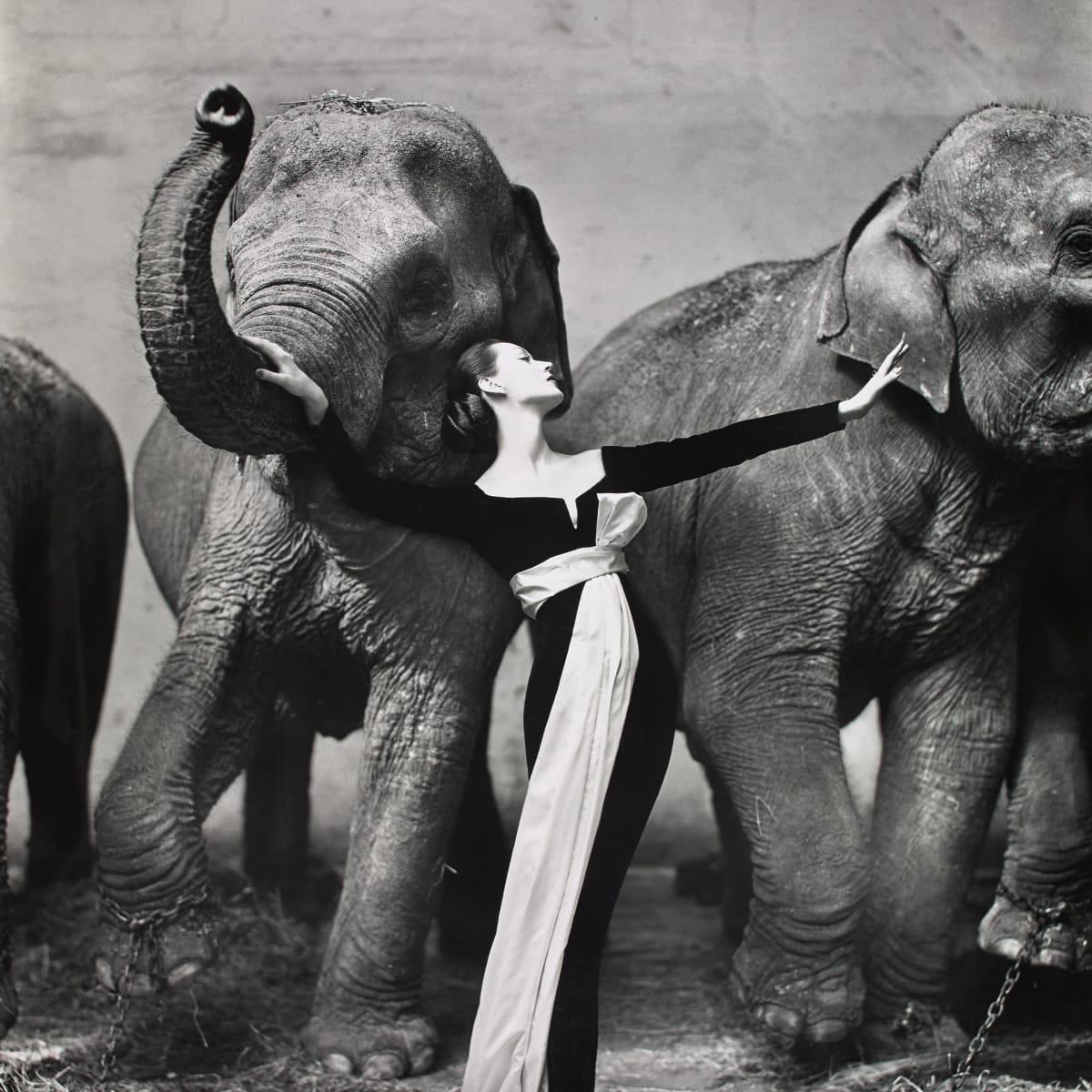 Richard Avedon, Dovima with Elephants