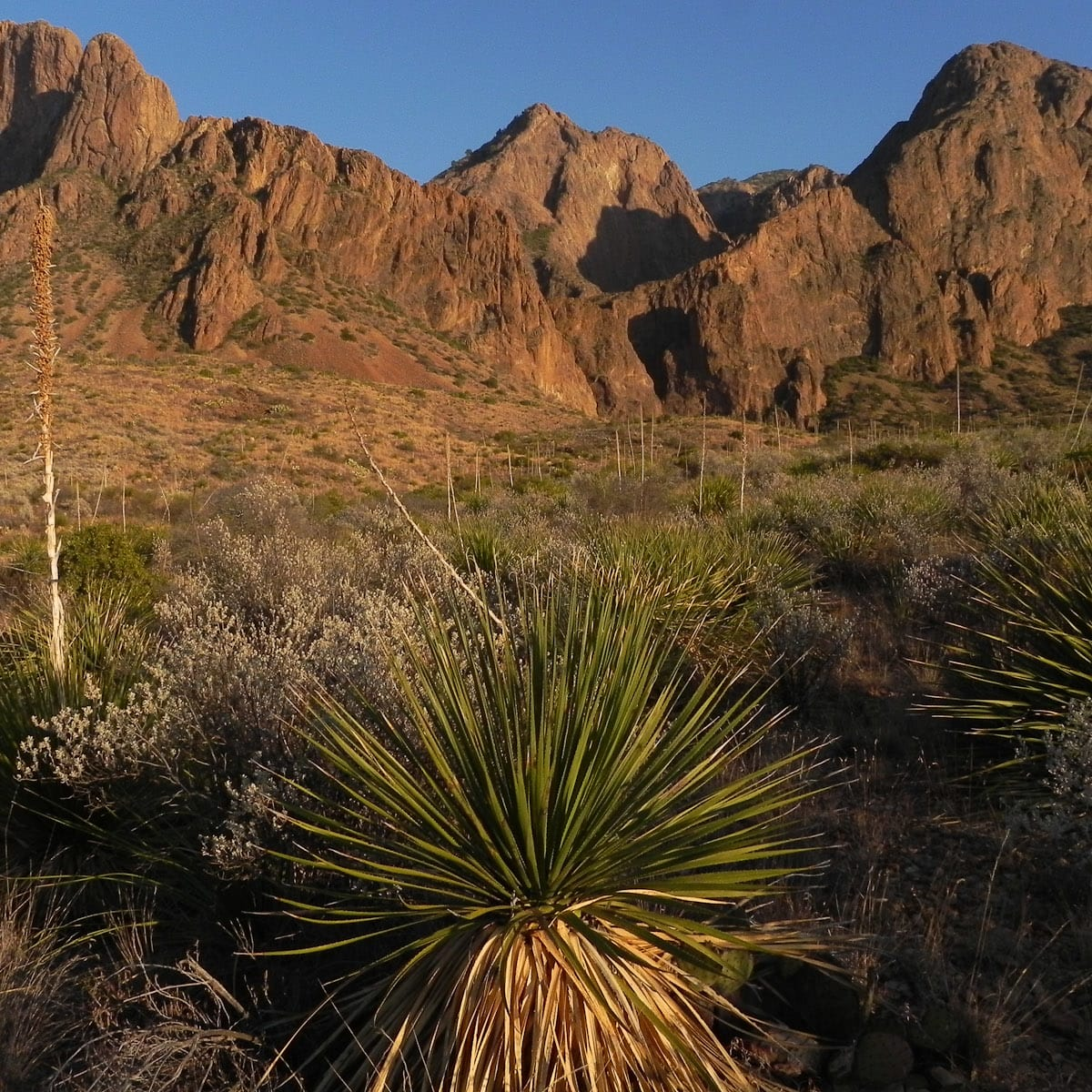 News_Big Bend_548